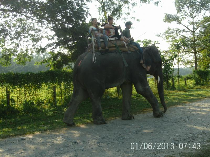 Chitwan elephant ride
